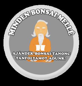 Bonsai Tanonc Tanfolyam