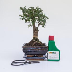 Mini Bonsai Ajándékcsomag